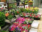 季節の花々の販売