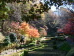 花菖蒲園付近の紅葉