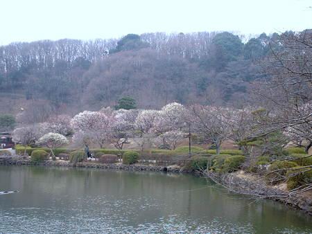 薬師池からの梅園
